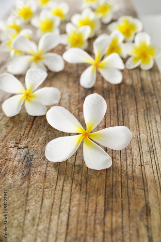 set of frangipani flowers and driftwood texture