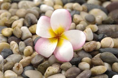 Macro of frangipani and colorful pebbles