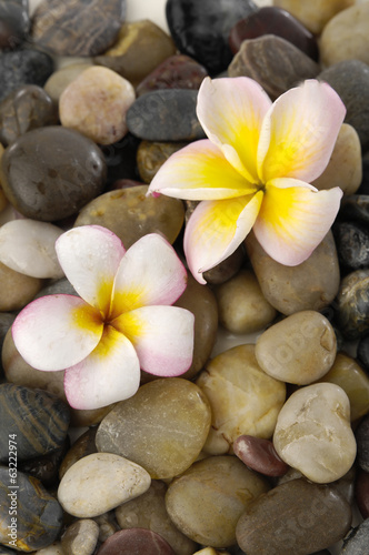 Gorgeous orchid on pile of colorful background