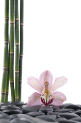 Spa concept-pink orchid and bamboo grove