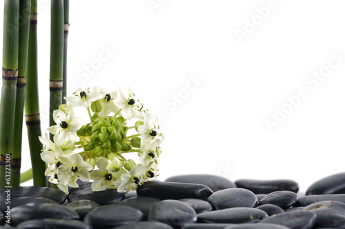 Spa concept-white flower and bamboo grove