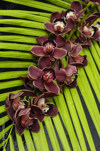 Red branch orchid with palm leaf texture