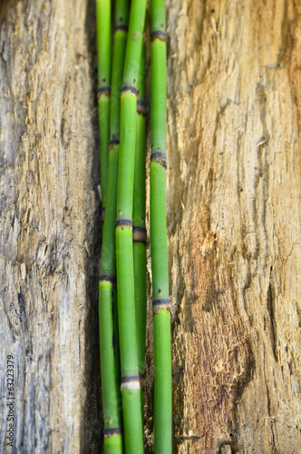 Thin three bamboo grove on old wood