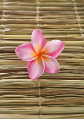 frangipani flowers and woven wicker texture