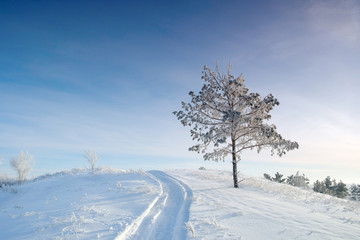 Winter landscape with pine