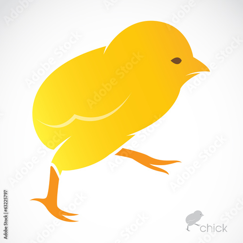 Vector image of an chick