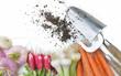 légumes frais et outils de jardin