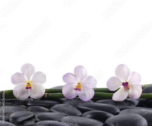 Spa concept-three orchid and bamboo grove
