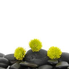 Set of green flower on pebbles