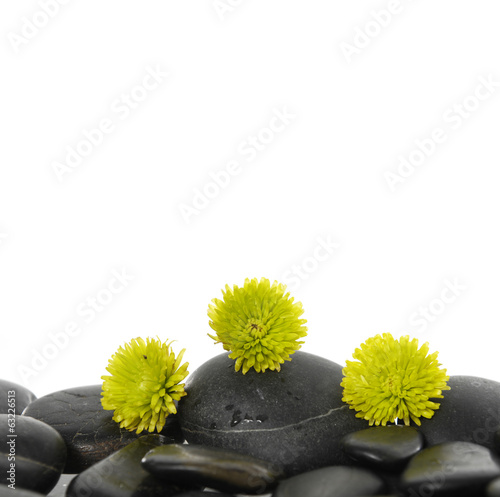 Set of green flower on pebbles