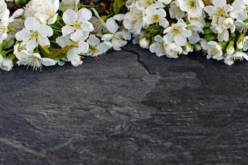 Kirschblüten auf einer Schieferplatte