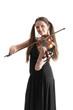 Violinist cat