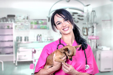 A beautiful veterinarian with a chihuahua