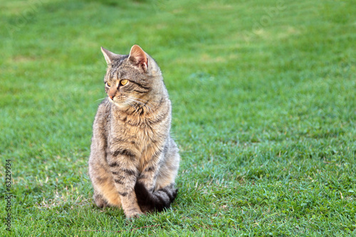 Domestic cat on a spring grass