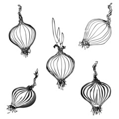 Set of hand drawn onion images. Sketch of shallot bulb
