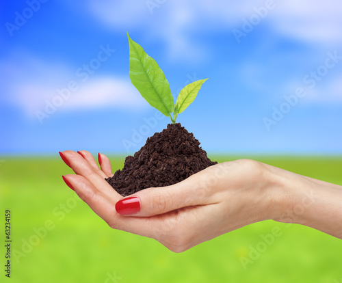 woman's hands are holding green plant over bright nature backgro