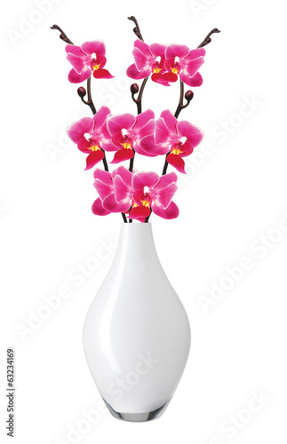 Flower beautiful pink orchid - phalaenopsis in vase isolated ove