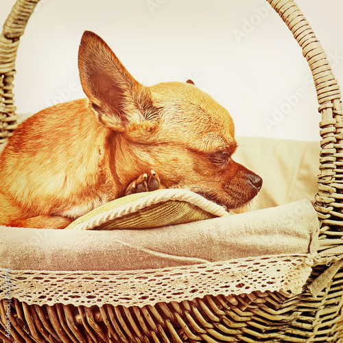 Sleeping red chihuahua dog in wicker basket with retro filter ef