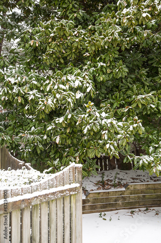 Magnolia Tree Behind Snow Covered Fence