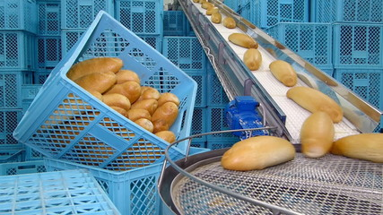 Fresh baked bread on conveyor belt, packing and sorting