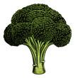 Broccoli vintage woodcut illustration