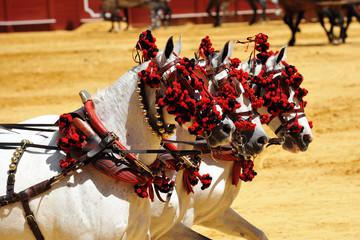 Caballos blancos, Andalucia, España