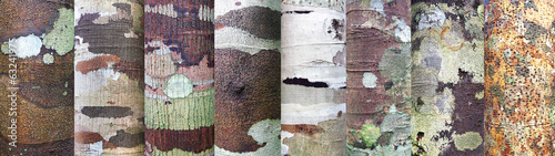 Collection of bark background.