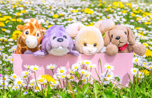 Box full of puppets on a beautiful flowered meadow