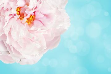 Pale pink flower over light blue