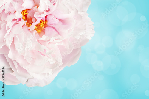 Pale pink flower over light blue