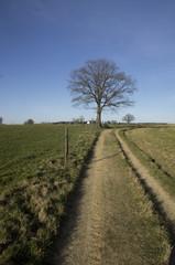 Wanderweg mit Baum unbearbeitet