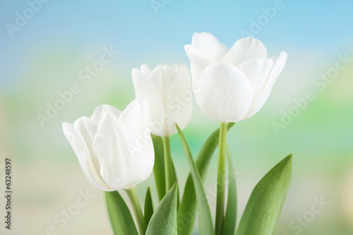 Beautiful tulips on bright background
