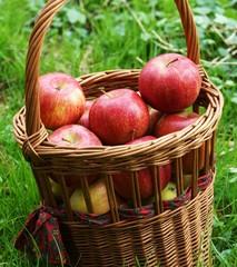 Korb mit frischen Äpfeln