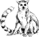 hand drawn lemur - 63254122