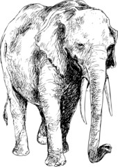 hand drawn elephant
