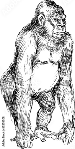 hand drawn gorilla