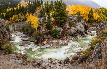 fall color in Colorado mountain, Aspen
