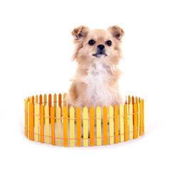 Hund hinter Zaun
