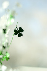 Shamrock Shadow