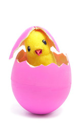 teddy chick and hatched pink easter egg