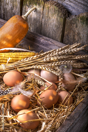 Eggs in a nest of straw, in an old wooden roost