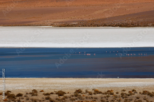 Laguna Colorada - flamingos