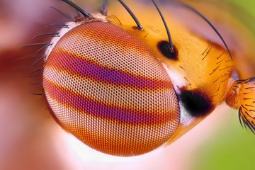 Macro fly compound eye surface at extreme magnification