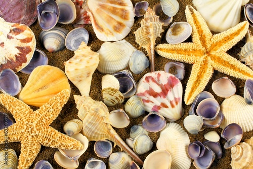 Full background of varied sea shells on sand