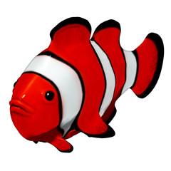 Clownfish 3d