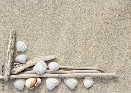 Sea shells and wood on sand