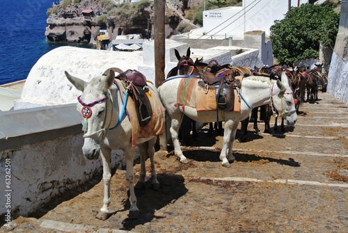 The donkey in Thira (Santorini Island - Greece)