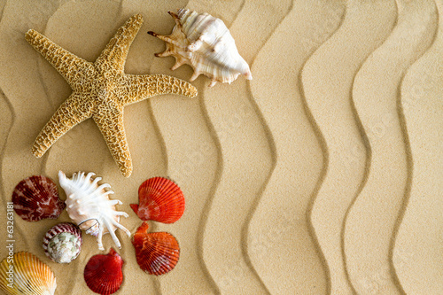 Starfish and Sea Shells on the Wavy Beach Sand