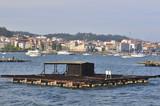 Typical bateas in Ria de Arousa (aquaculture parks), O Grove, Ga poster
