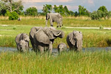 Elefanten trinken am Wasser